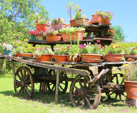 carreta madera: viejo vagón de madera decorado con muchas macetas de flores