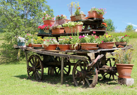festooned: wooden wagon decorated with many pots of flowers in the meadow in the mountains