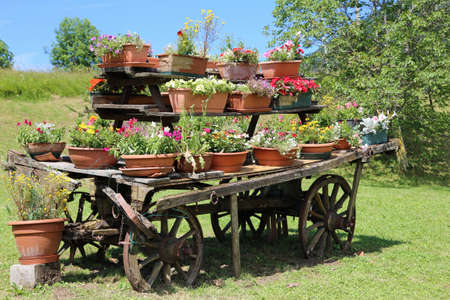 festooned: very old wooden cart festooned with many pots of flowers in the meadow in the mountains