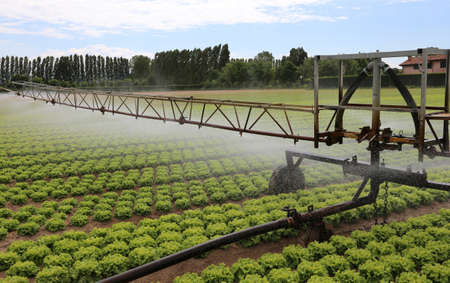 po valley: automatic irrigation system of a cultivated field of green lettuce in po valley in Italy Stock Photo