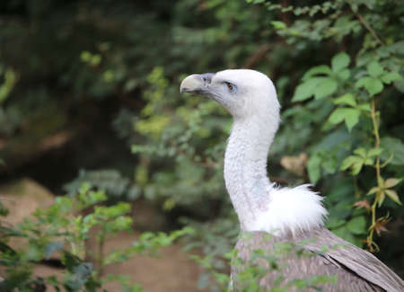 huge vulture bird like a Griffin with long neck in the forest