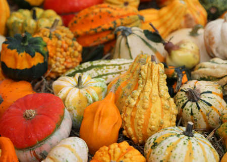 many coloured Pumpkins for halloween party for sale at the greengrocer