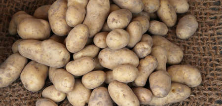 genuine: many genuine organic raw potatoes for sale