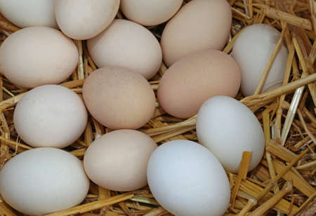 many fresh chicken eggs in the basket with straw
