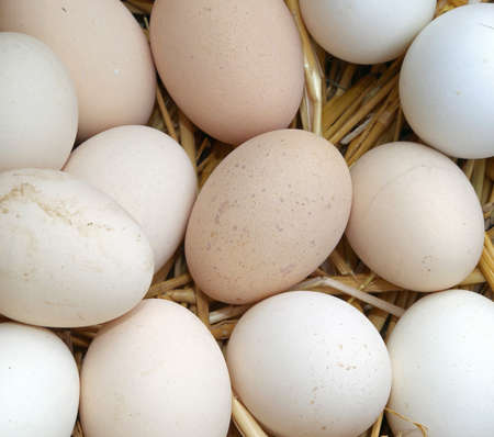 frailty: many eggs of hen in the basket of the farm