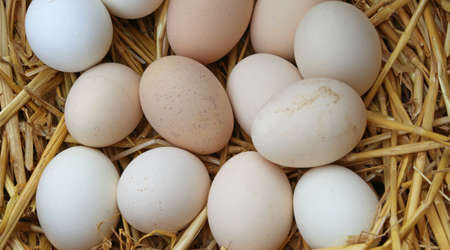 brood: many fresh eggs in the basket of the organic farm