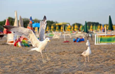 sun umbrellas: seagulls at the beach with sun umbrellas Stock Photo