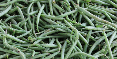 grower: Background of ripe green beans freshly harvested from the grower