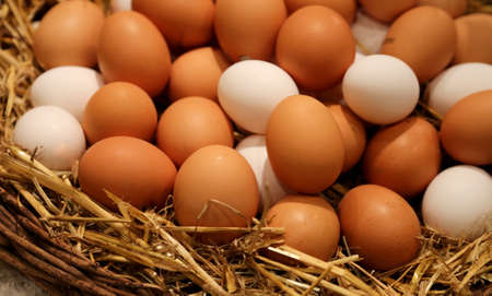wicker basket with lots of fresh chicken eggs collected in the henhouse