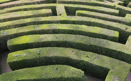disoriented: aerial view of an intricate maze of hedges