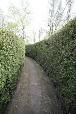 endlessly: dead end street in an intricate maze of hedges