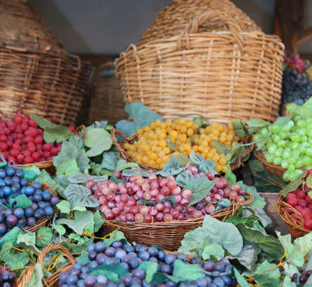 many bunches of ripe grapes and carboys in the background Stock Photo