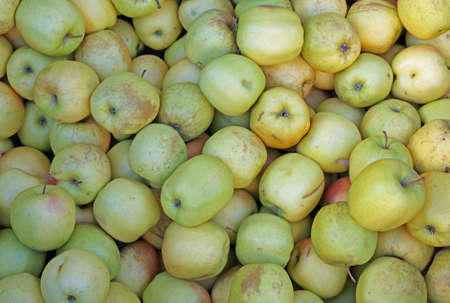 lots of green apples for sale at the greengrocer