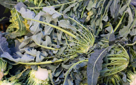 greeen: Genuine original green broccoli Northern Italy called BROCCOLO FIOLARO for sale at the greengrocer Stock Photo