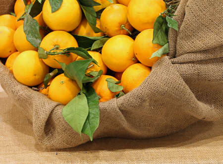 burlap sack with natural oranges with green leaves