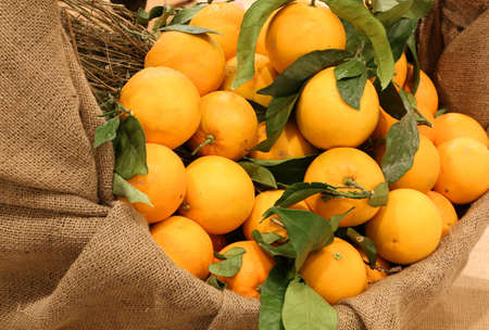 burlap sac: burlap sack with ripe oranges with green leaves