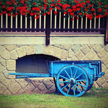 amish: blue old wooden cart with the geranium in the farm
