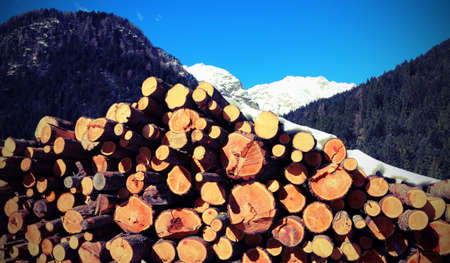 snowy mountain with the pile of cut logs with snow and antique effect Stock Photo