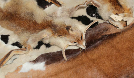 fox furs with his head for sale in handcrafted leather goods