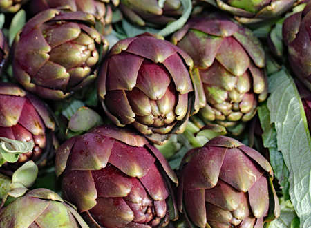 ripe artichokes grown in the field in Italy for sale in the southern Italian market Stock Photo