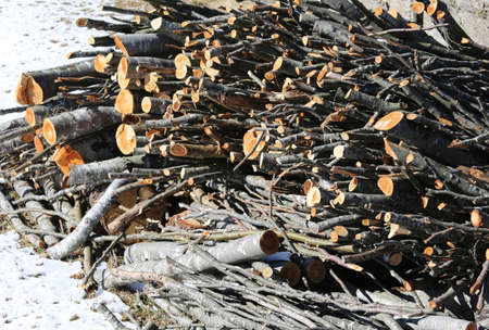 logs cut by lumberjack in the woodshed with white snow Stock Photo
