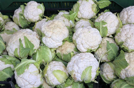 white cauliflowers for sale in greengrocers stall in winter