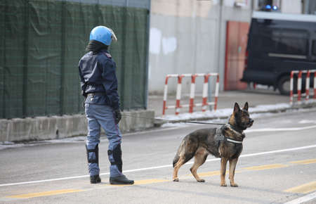 sniffer: trained police dog during surveillance along the streets of the city