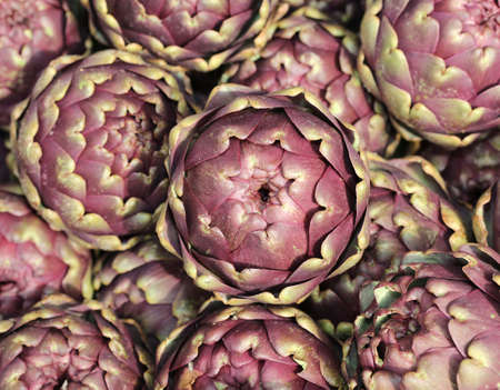 agrigento: big ripe artichokes grown in the field in Italy for sale in the southern Italian market