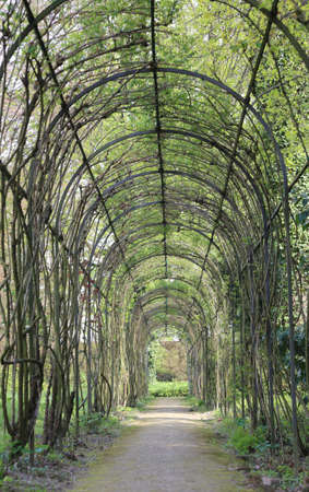 luxuriously: beautiful hedges tunnel and flowers in a garden in spring