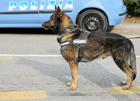 sniffer: Italian police dog while patrolling the city streets before the football game to prevent terrorist attacks