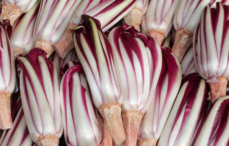 the po valley: Backgrounds of red ripe radicchio havested in the Po Valley in Italy in winter Stock Photo
