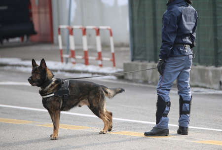 sniffer: Dog Canine Unit of the police and a police officer in uniform during the inspection of the area