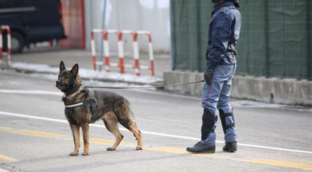 Dog Canine Unit of the police called K-9 during the inspection of the area before political event Imagens - 80864558