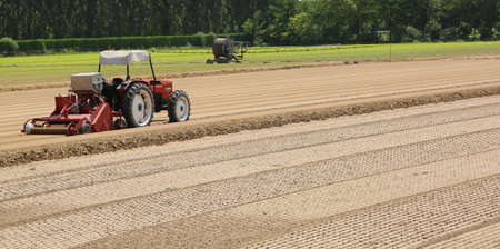 the po valley: Field cultivated with lettuce and tractor during sowing of little plants sprouts in plowed soil