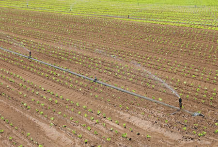 lactuca: Automatic irrigation system to water the fields during summer drought