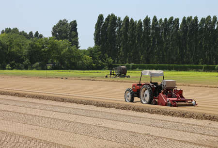 Field cultivated with lettuce and tractor during sowing of little plants sprouts in plowed soil