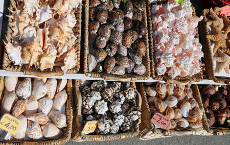 Many tropical and exotic shells in baskets for sale at a souvenir shop