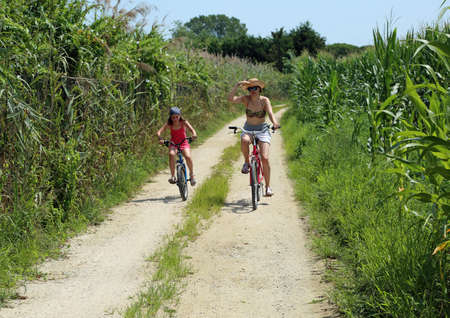 Mom and young daughter ride on bicycles on the narrow road in the middle of corn fields in summer Stock Photo
