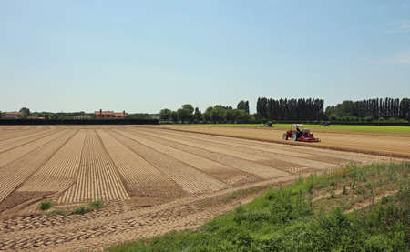 the po valley: Field cultivated with lettuce and tractor  in the Po Valley in Italy
