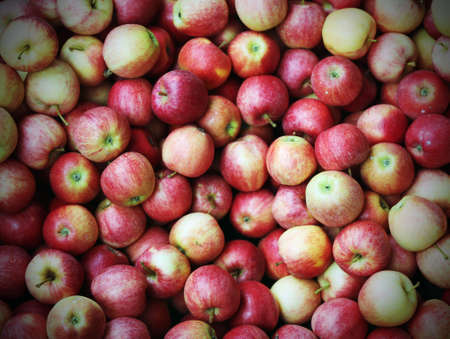 background of beautiful mature apples just picked in the orchard with vintage effect