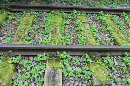 rails of an abandoned track for trains in the forest with plants Stock Photo