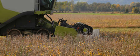 Combine harvesting during cereal harvesting in the cultivated field in summer Stock Photo