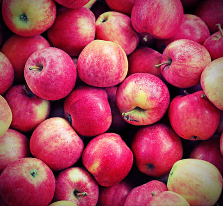 background of tasty red APPLES freshly harvested from the trees with vintage effect