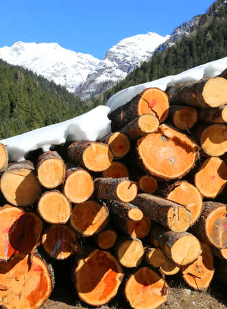 big stack of logs in the mountains in winter with snow Stock Photo