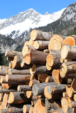 big stack of logs trimmed in the mountains in winter with white snow
