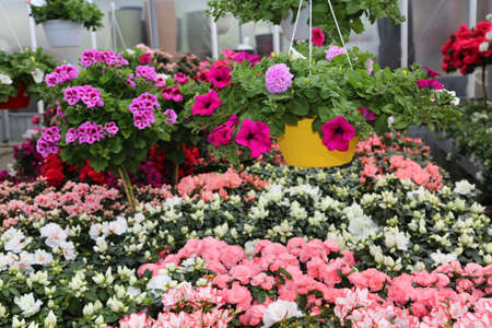 vases of flowers in the large greenhouse Florist for sale