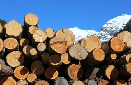 huge woodpile of logs cut by loggers in the mountains in winter with snow