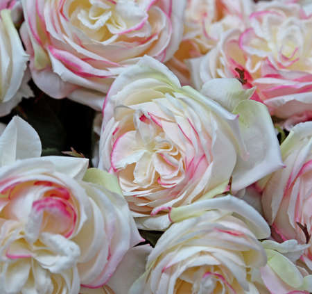 background of pink and white rose in the florist shop