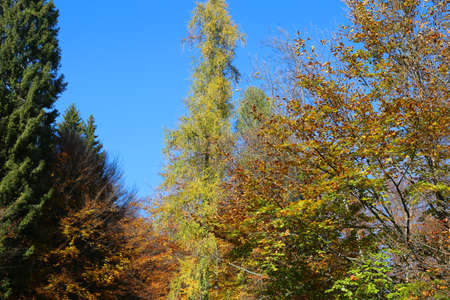 beautiful autumn background with trees and beech with colorful leaves with very lively colors