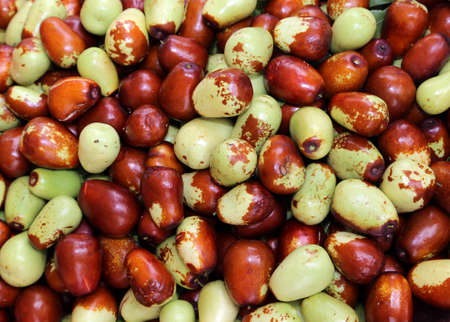 many olives as soon as collection from olive tree in the mediterranean country
